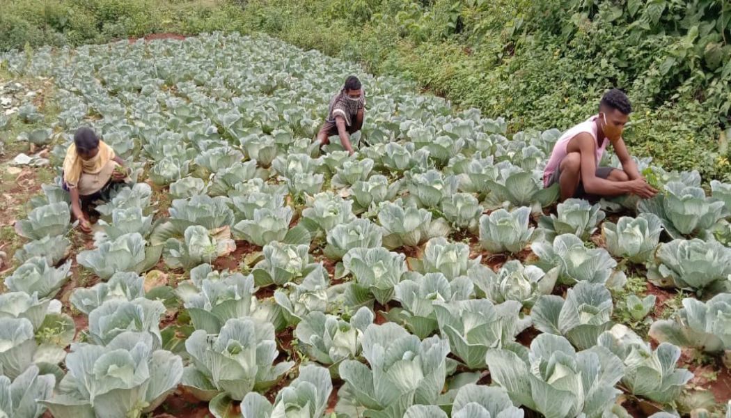 The Walmart Foundation announces two new grants to help India's smallholder farmers