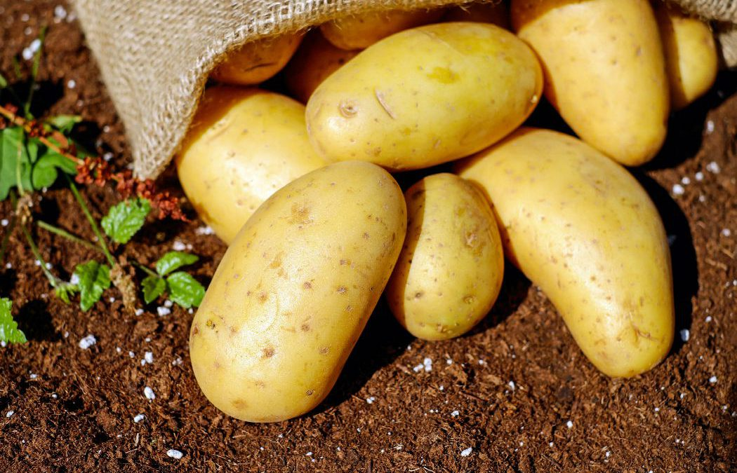 8 Unknown Health Benefits of Potatoes You Will Never Believe
