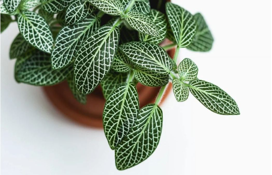 6 Most Beautiful Plants That Grow Amazingly In Water Without Soil