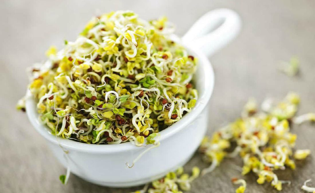 7 Hidden Health Benefits of Sprouted Foods You Probably Don't Know